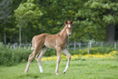 Foal in a field